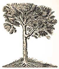 pohon rejeki